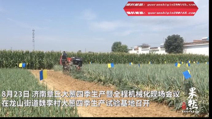 果然视频|这家章丘大葱生产基地厉害了!四季生产!全程机械化!