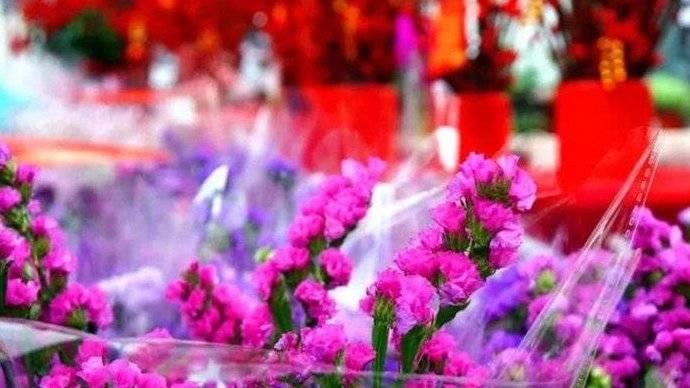 有花才叫过年!济南年宵花热销!家有老人孩子慎买这些花