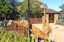 济南动物园、园博园今起闭园,济南这家商场暂停春节活动