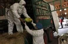 济南出发,一路飞驰!300吨蔬菜送抵武汉