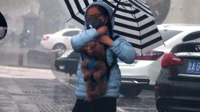 果然视频|济南春雨里的温馨,小女孩如此超萌遛狗