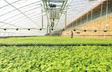 春耕在即,山东各地加强春耕备耕,推动农资企业复工复产