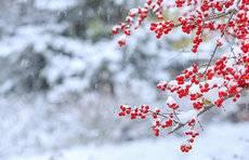 大范围小雨雪天气再次来袭!明晚开始,山东中北部有雨夹雪
