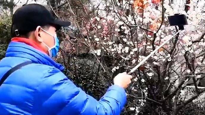 果然视频|趵突泉景区梅花绽放  香气扑鼻而来