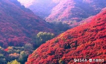 绯红的济南红叶谷晨曦,第一缕阳光让金秋的景色美爆
