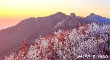 情报站|雨雪退去,日照大青山出现雾凇景观,洁白晶莹!