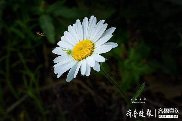 德州-鐵流 攝  編輯:王媛