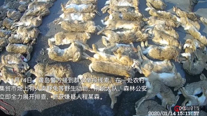 壹视频| 黄岛刑警森林公安联手斩断跨地区非法收售野生动物链条