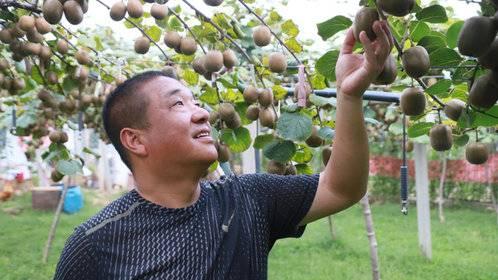 博山源北村书记吕海峰:他曾用一片猕猴桃,撑起了村民的致富路