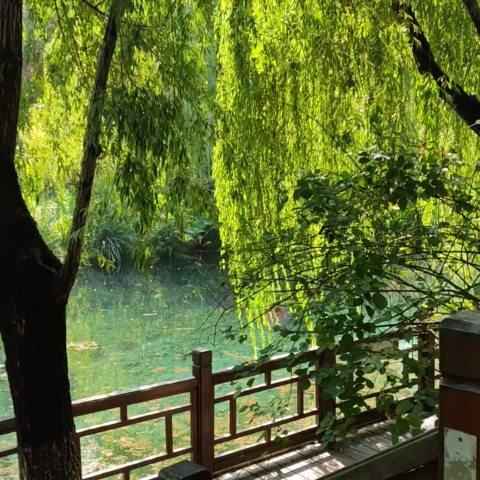 优雅绿荫长廊。