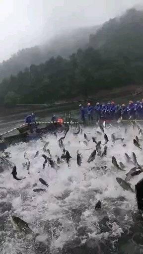千湖岛捕鱼场面真壮观!!